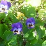 garden-35_med