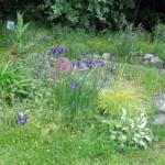 garden-4_med