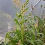 garden-6_med