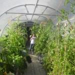 garden-7_med